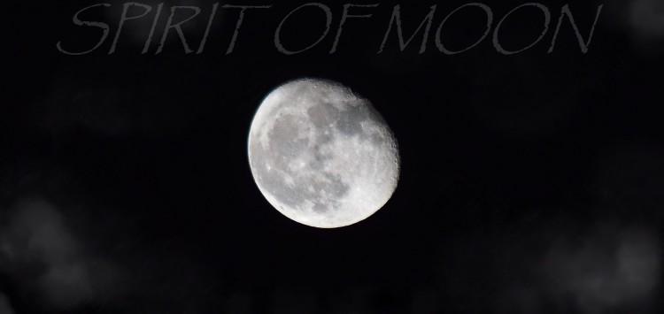 élevage spirit of moon